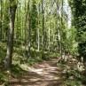 foresta_umbra_cerreta
